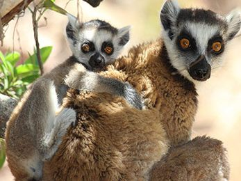 madagascar-featured