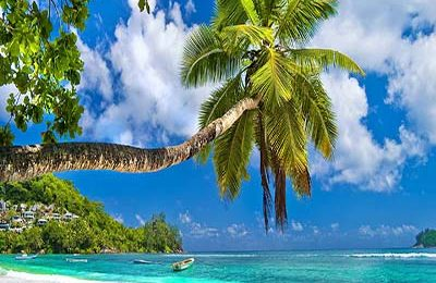seychelles-tree-beach-featured
