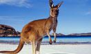 australia-megamenu