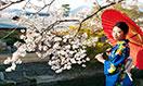 japan-megamenu
