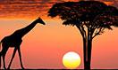 south-africa-megamenu