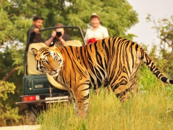 india-tiger-safari-featured