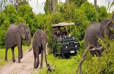 southafrica-safari-elephant-min