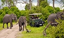 southafrica-safari-elephant-megamenu